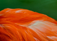 Caribbean pink flamingo feathers against green background