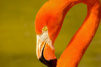 From corner to center caribbean pink flamingo