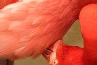 Head bent L neck underneath