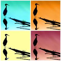 20x20 Four Silhouette Great Blue Heron
