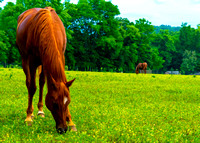 Painterly rendering of horse grazing on farm