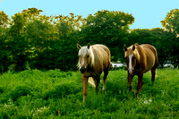 Artistic painterly rendering two horses in pasture