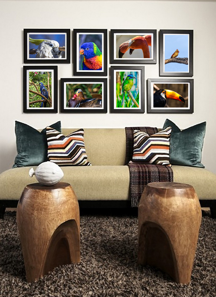 birds framed on wall
