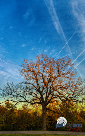 Portrait of barren tree Percy Warner Park