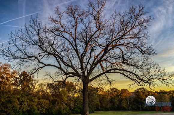 In back field Percy Warner Park barren tree