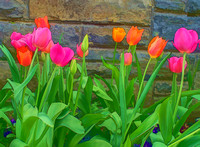 Cartoon Tulips Against Stone Wall
