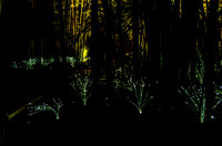 Bamboo Garden Fireflies Flow Of Lights