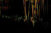 Bamboo Garden Fireflies Lighted Bamboo