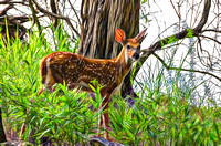 Artistic rendering White-tail Fawn Deer