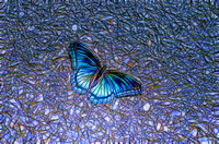 Artistic colorful digital rendering of Butterfly