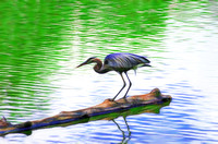 Painterly Effect of Great Blue Heron