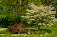 Elegant Japanese Garden at Ellington Ag Center with Dogwood Tree