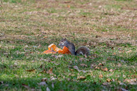 Squirrel eating on pumpkin seeds