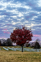 Middle Tennessee Veterans Cemetery Red Fall Tree Gravestones In Background