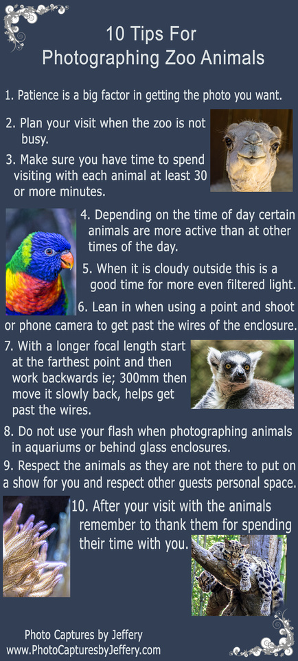 10 Tips For Photographing Zoo Animals