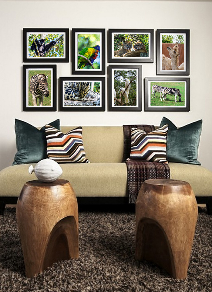 assortment of animals framed on wall