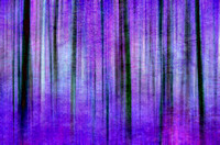 Purple delight streaks of trees artistic effect version two