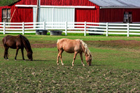 Two horses grazing on horse farm