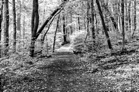 Nature hiking trail in black and white