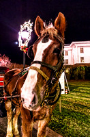 Carriage Horse Country Christmas Nashville TN