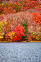 Brightly Coloured Digital Rendering Fall Colors Radnor Lake
