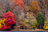 Bright Red Colourful Fall Trees Radnor Lake Nashville Tennessee