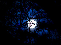 Full October Moon Behind Branches