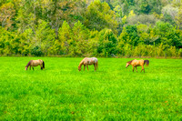 The magic of three horses in a pasture