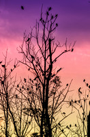 Bird filled tree with shade of purple pink orange yellow sky