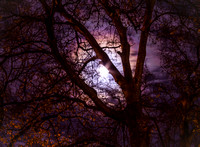Full October Moon Behind Tree