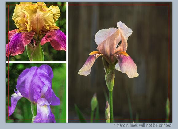 Iris Floral Collage