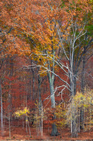 Late Fall Colors of Radnor Lake Woods Along Lake Vertical