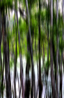 Trees abstract Murfree Spring Wetlands
