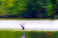 Blue Heron in flight motion abstract