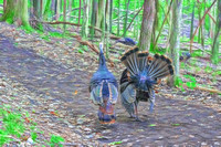 Two Wild Turkeys walking down trail artistic rendering