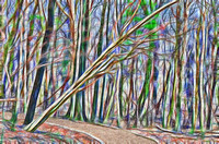 Colorful rendering of winter trail at Radnor Lake