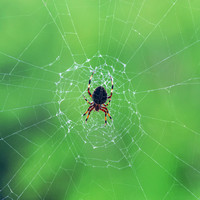 Elegant web with spider Dry Brush Effect