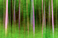 Forest Trees Green of Summer artistic effect