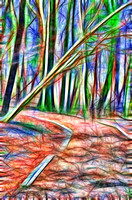 Colorful rendering of winter trail off into the woods of Radnor Lake